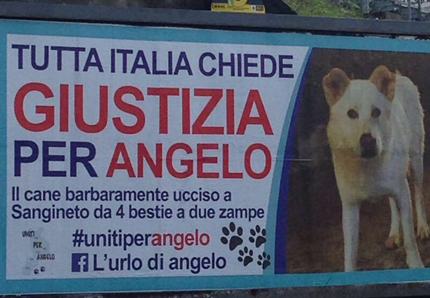 Il cane Angelo rivive al cinema