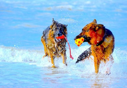 Vacanze, i 10 campeggi e villaggi pet-friendly